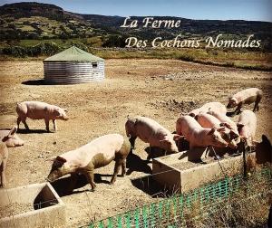 ferme_cochons_nomades